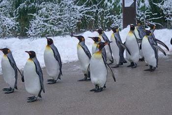 Нетаньяху: пингвины Антарктиды являются сторонниками Израиля