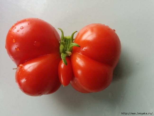 ПОСИДЕЛКИ. Фруктово-овощные...