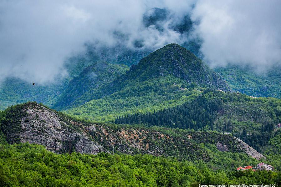 По горам и лесам Черногории.