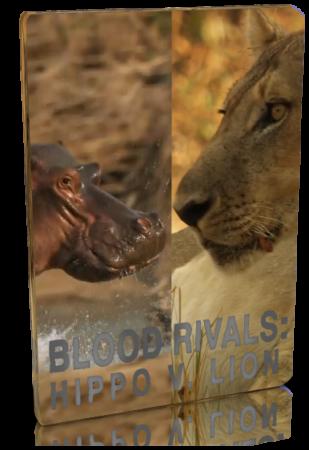 Кровавые соперники: гиппопот…