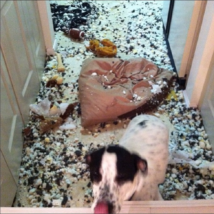 Когда хозяева завели собаку, но не занимаются ею...