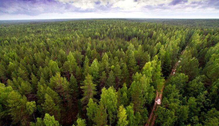 Что будет, если на Земле появится лес размером с континент?