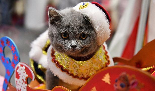 Приближается праздник? Спасайте кошку!