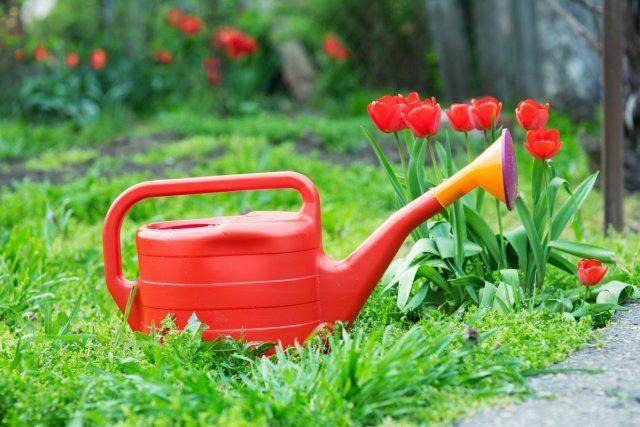 Что делать в цветнике в мае − полный перечень работ