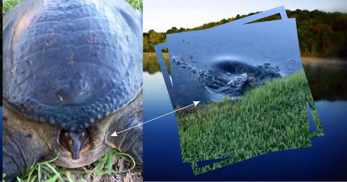 Что будет, если напугать черепаху? Эта сделала такое, что оставила прохожего с открытым ртом