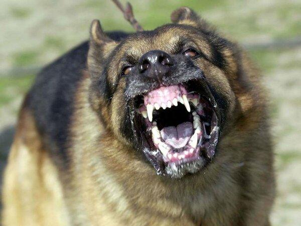 «Собачья угроза»