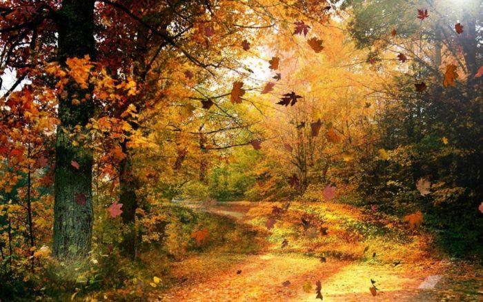 золотая осень фото - 01