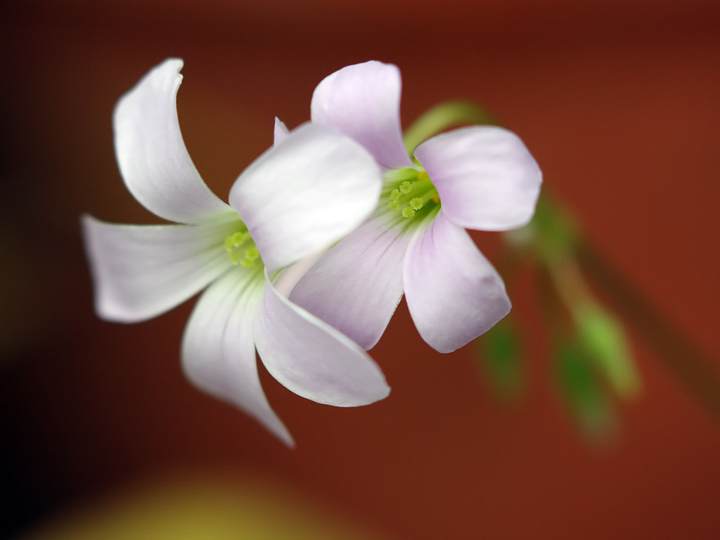 Мягкий цвет