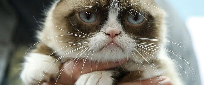 Недовольные коты, но такие о…