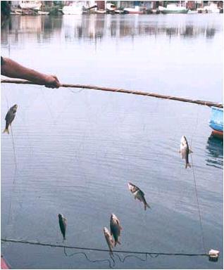 Сделать своими руками рыболовные экраны