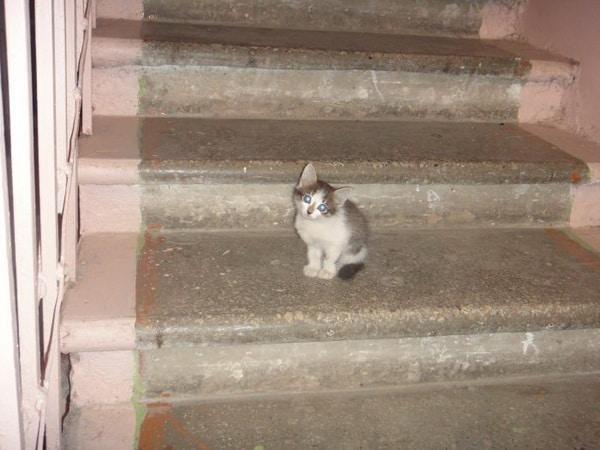Бездомная кошка родила котят в чужом подъезде, но вскоре кто-то выставил малышей на улицу