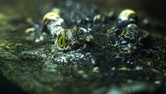 Испытание верой: Крокодилы съели священника, демонстрировавшего, как Иисус ходил по воде