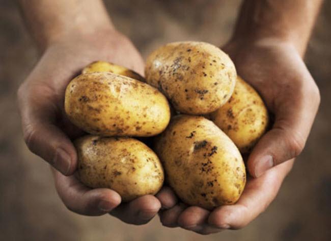 Картофель заморозка, нельзя замораживать, продукты