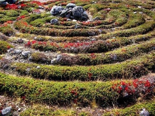 Каменные лабиринты острова Большой Заяцкий (8 фото)