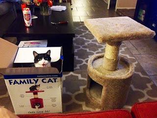18 смешных котов, которые не…