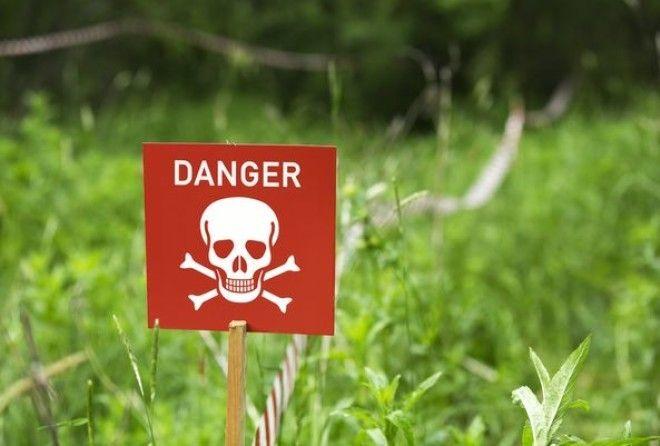 10 токсичных комнатных расте…