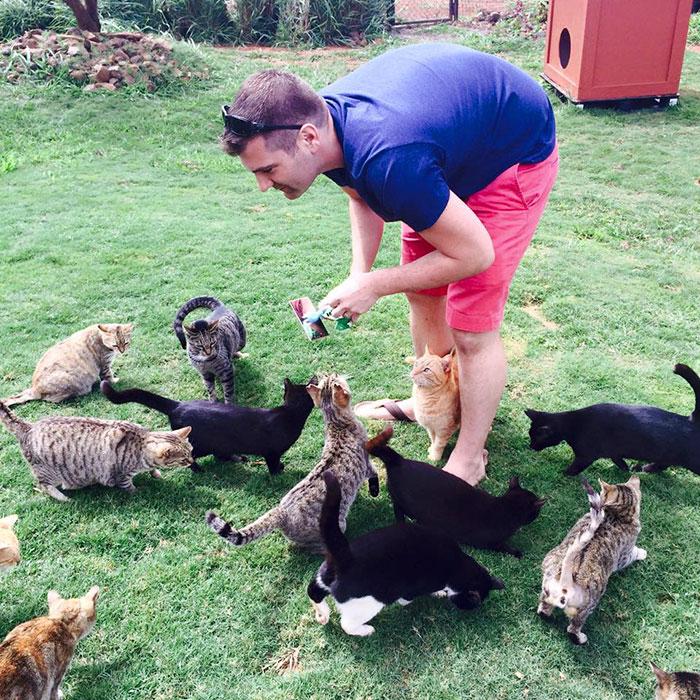 Люди съезжаются со всего мира в кошачий заповедник на Гавайях, ведь здесь живут почти 500 кошек!