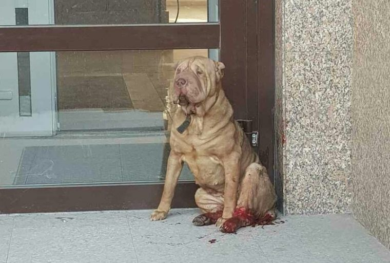 По улицам бродила собака с перебитыми лапами. Что же с ней случилось?