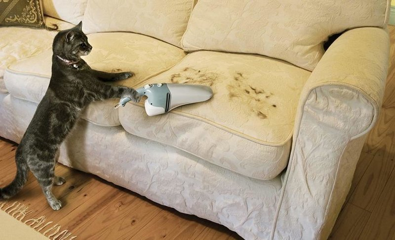 Эти забавные животные всячески пытаются помочь своим хозяевам с уборкой в доме