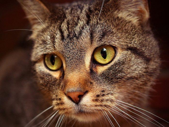 Для кошки это, видимо, много…