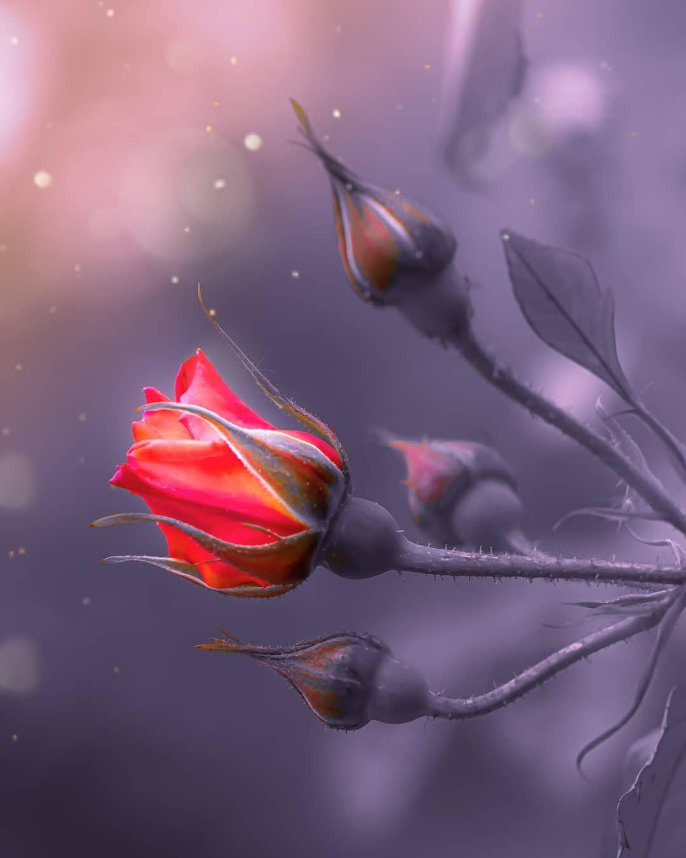 Красивые цветы на снимках Таши Тайдель