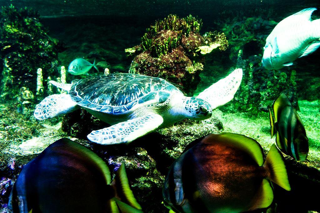Аквариум Генуи Италия. Океаны в миниатюре. Самые известные и крутые океанариумы мира. Фото с сайта NewPix.ru