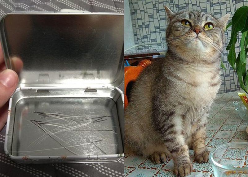 Мужчина выставил на продажу кошачьи усы, и ими заинтересовался покупатель со специфичными запросами
