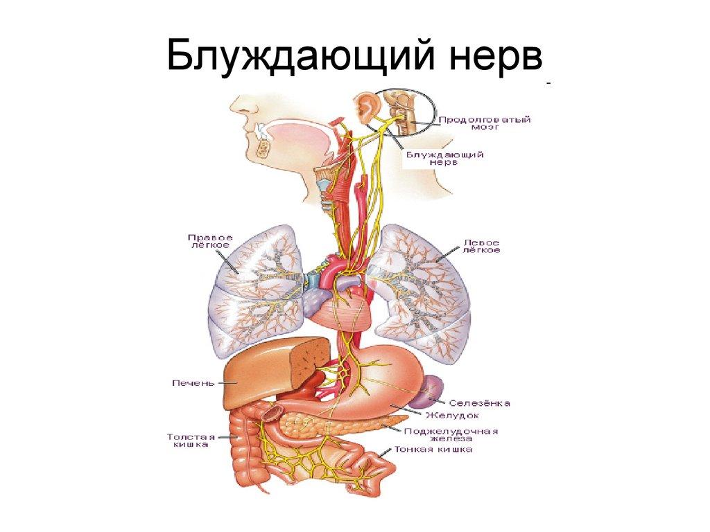 Как стимулировать блуждающий нерв и почему это важно?