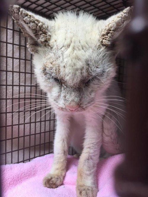 """""""Слепой"""" кот, которого подобрали на улице, удивил своими необычными глазами"""