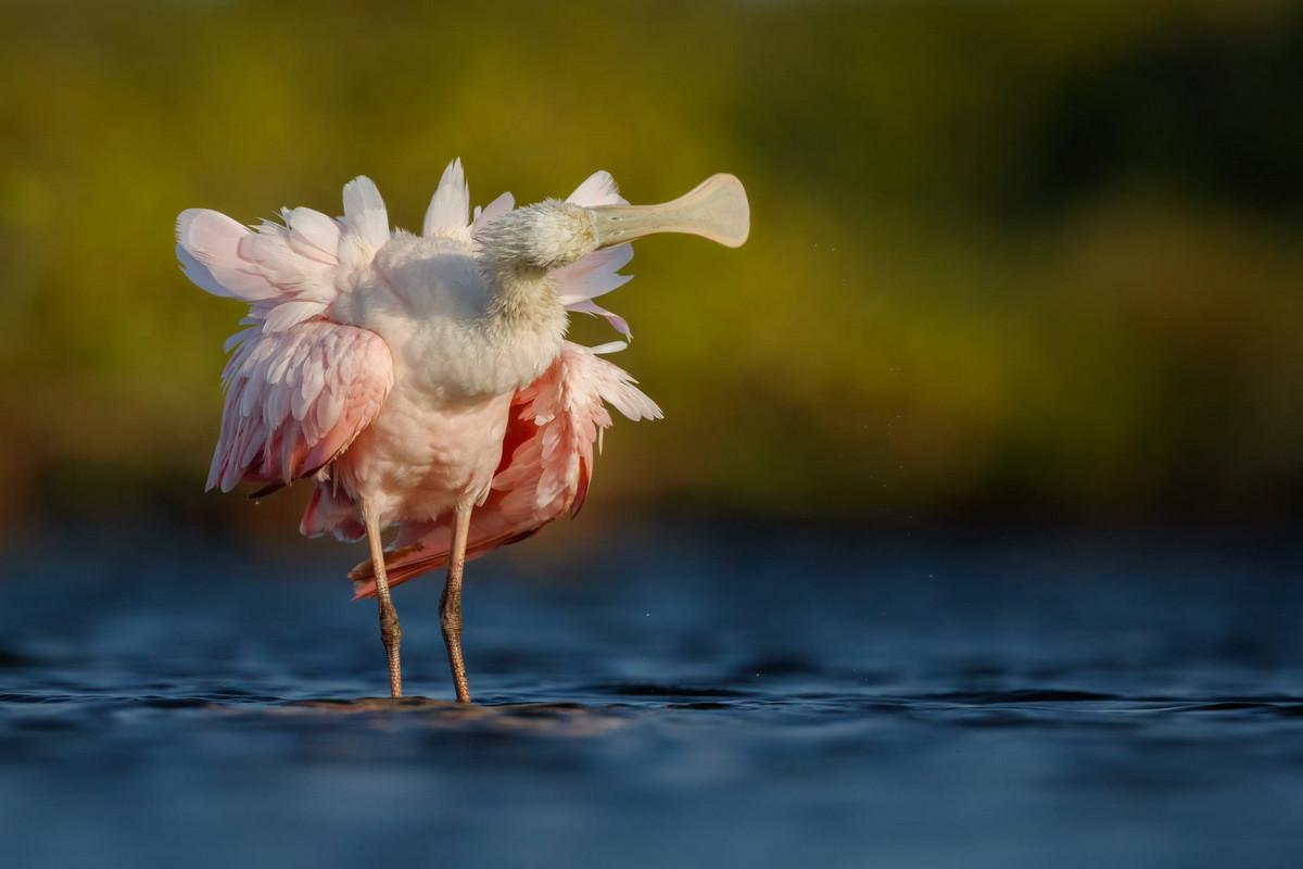 BIRD PHOTOGRAPHER OF THE YEAR 2018:  ЛУЧШИЕ ПТИЧЬИ ФОТОГРАФЫ