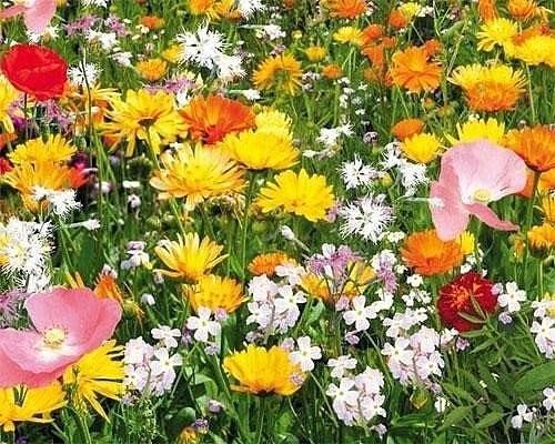 12 лучших растений для мавританского газона