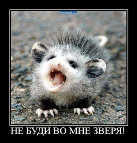 Такие ржачные животные!)