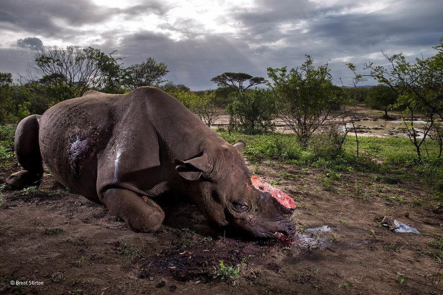 Лучшие фотографии дикой природы 2017