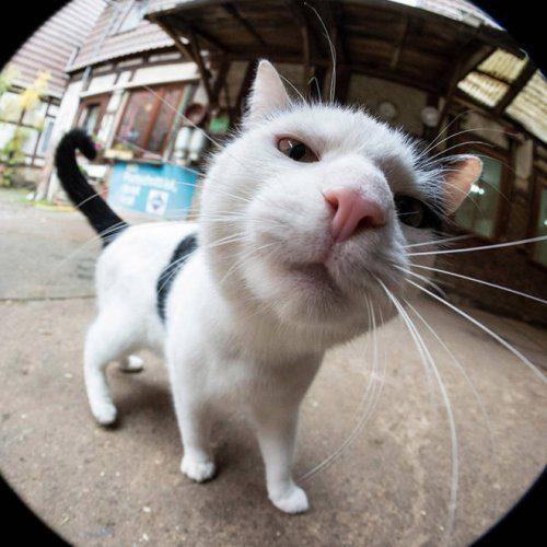 Любопытные кошки