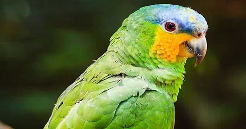 Попугай дождался, пока хозяе…