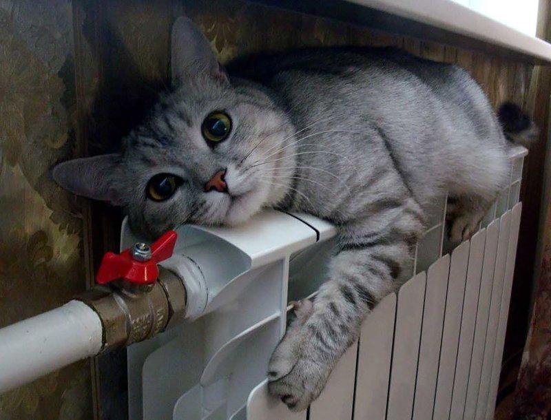 Пост кошачьей мерзлоты
