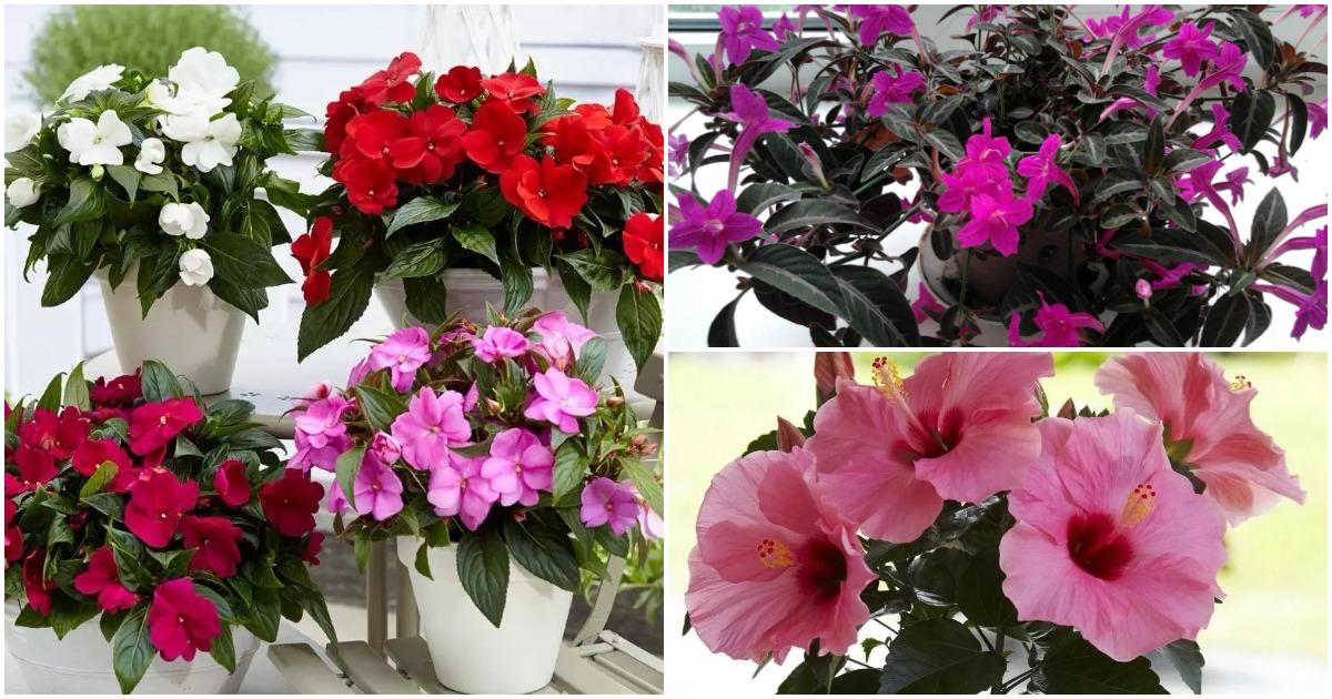 Эти комнатные цветы будут радовать своим цветением не переставая