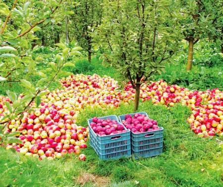 Все о формировке и обрезке плодовых деревьев