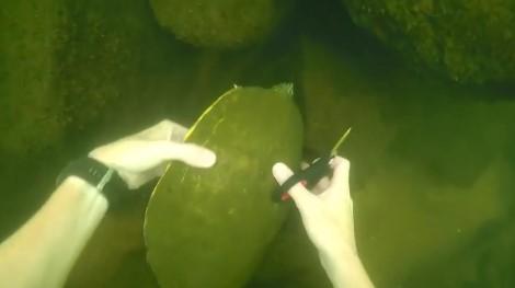 Парень занимается поиском «сокровищ» на дне реки. Его находки порой удивительны (видео)