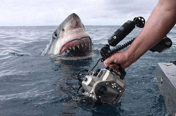 Дайвер заснял акулу-людоеда вблизи