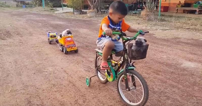Малыш возит на велосипеде щенков, а те — балдеют. Это самое милое видео сегодняшнего дня!