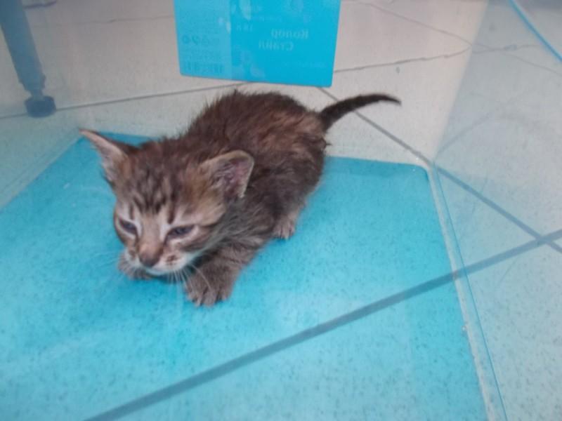 В Петербурге вытащили из-под земли трех маленьких котят