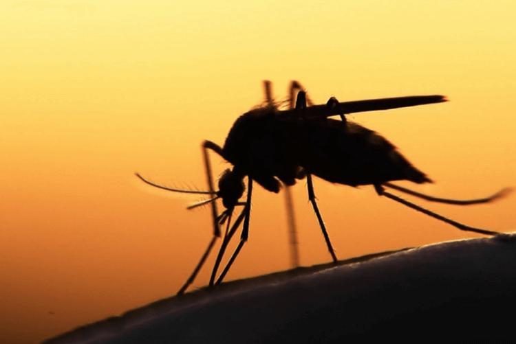 Как комары изменили мир