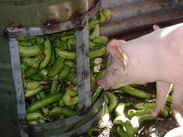 Банановая кожура для сельхоз животных.