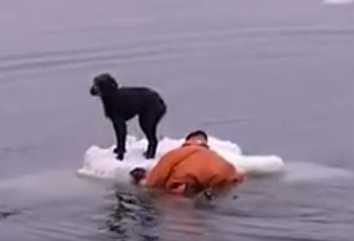 Моряки спаски собаку, которая дрейфовала на льдине в Охотском море