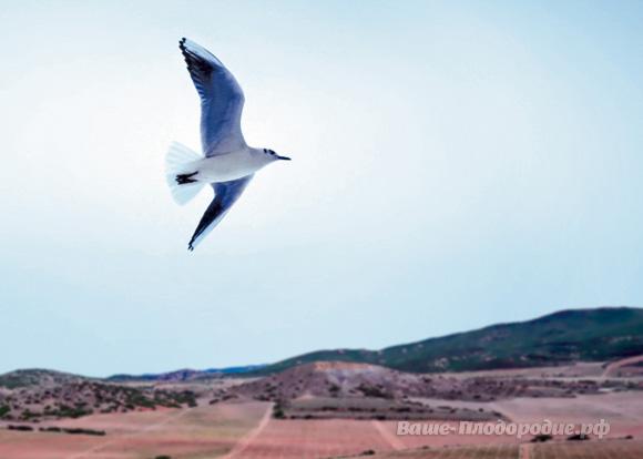 C высоты птичьего полёта