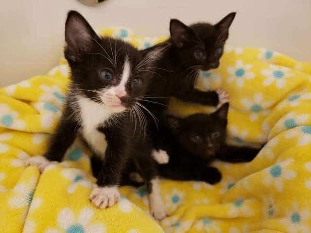 трое котят