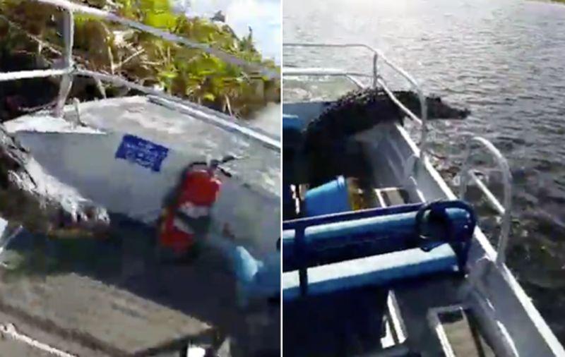 Прыгнувший в лодку аллигатор едва не утопил туристов