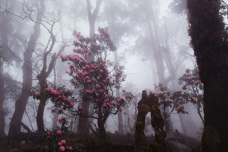 Мистические пейзажи Лангтанг