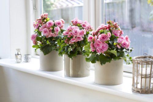 Чтобы цветы в доме цвели пышно и долго!